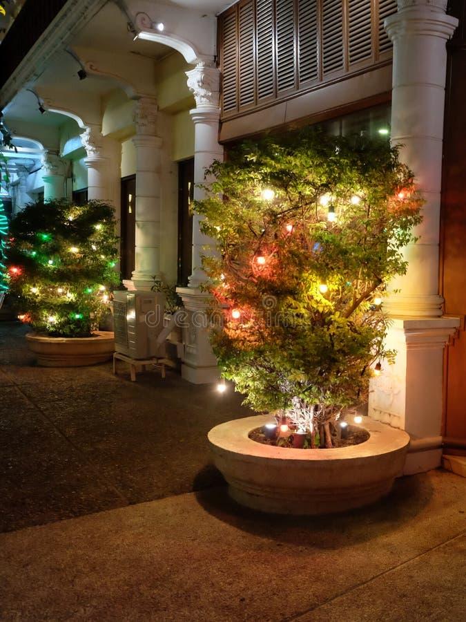 用在城市街道上的光装饰的植物 免版税库存图片