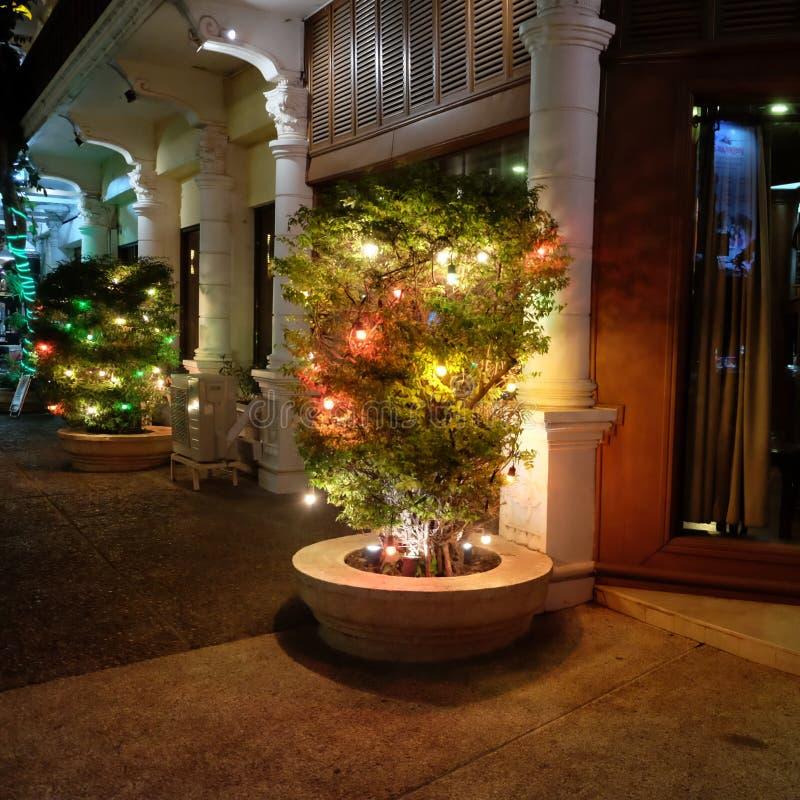 用在城市街道上的光装饰的植物 免版税图库摄影