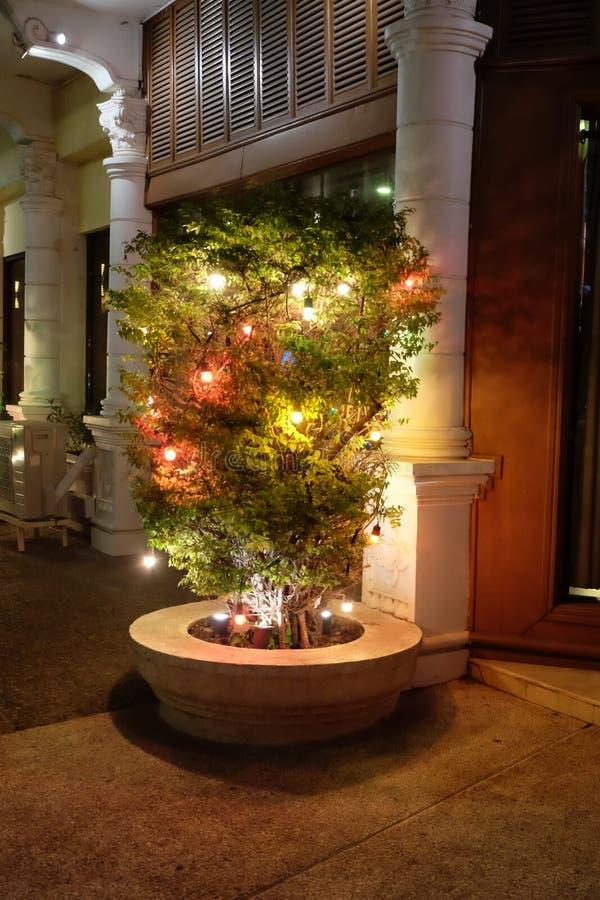 用在城市街道上的光装饰的植物 库存图片