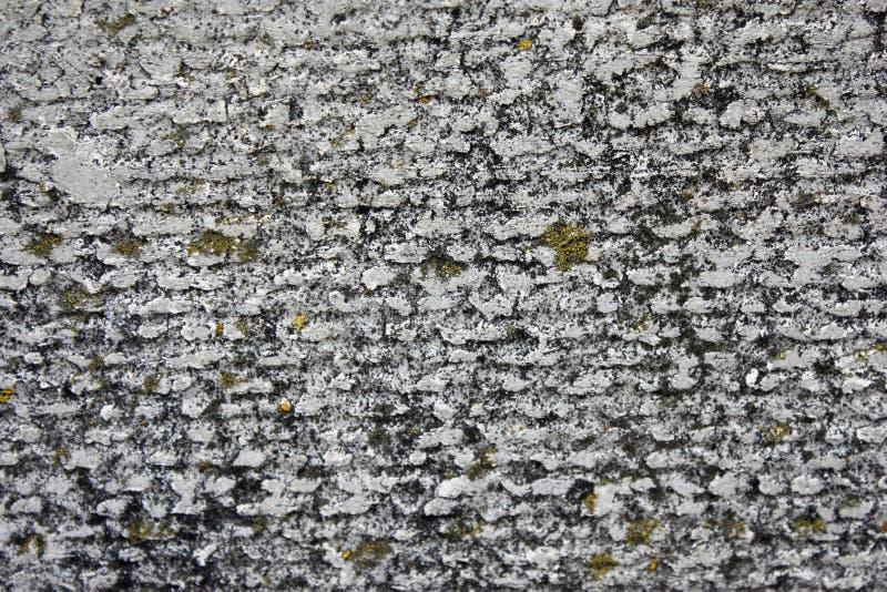 用地衣和青苔报道的石棉板岩具体纹理,工业物质自然水泥,特写镜头 库存照片