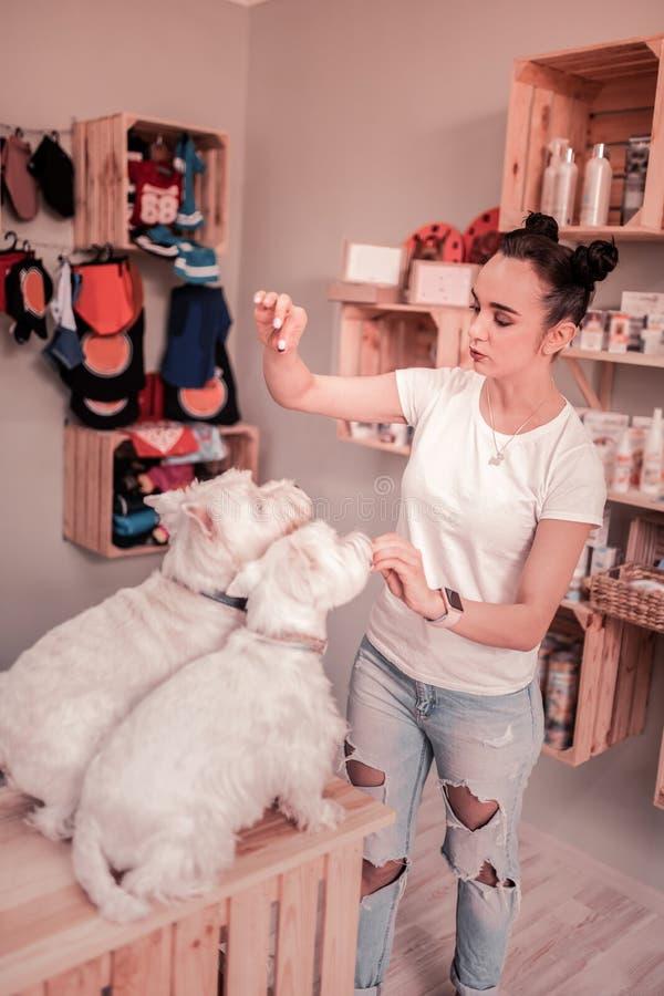 用头发小圆面包训练和喂养她的狗的妇女 免版税库存照片
