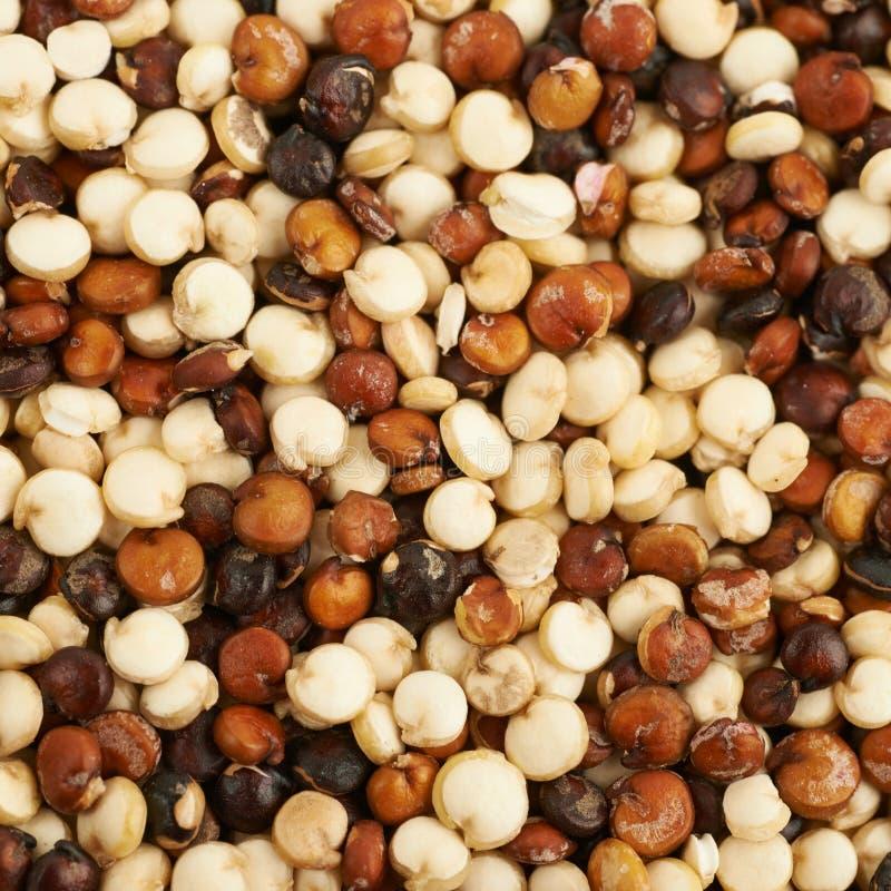 用奎奴亚藜种子涂的表面 免版税库存照片