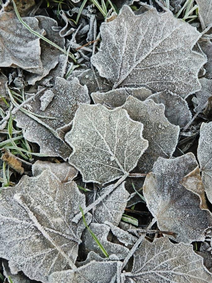 用小冰晶盖的叶子 库存图片