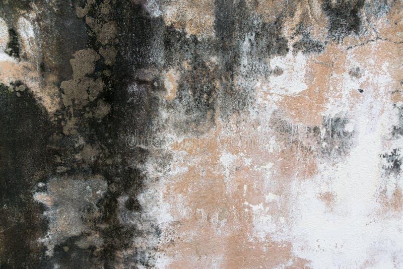 用尘土和模子盖的墙壁 图库摄影