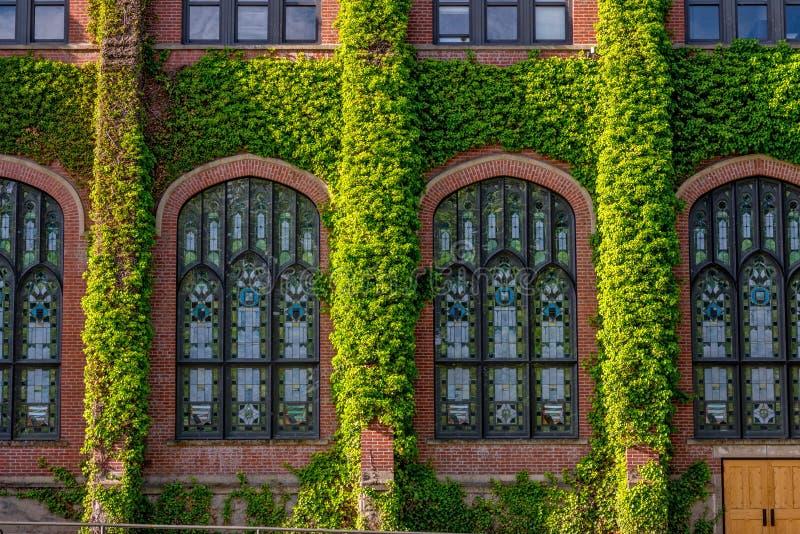 用常春藤盖的大学大厦 库存照片