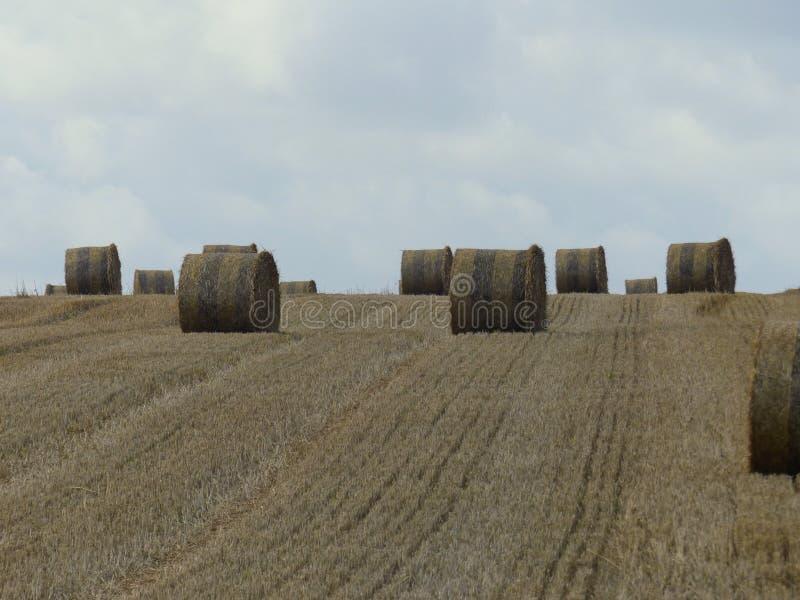 用干草桶削减的麦田滚动在诺曼底,法国 免版税库存图片