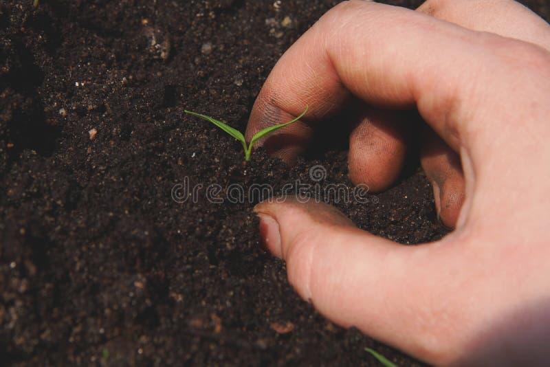 用手种植土壤的绿色植物 库存照片