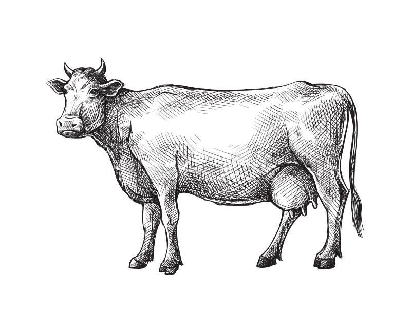 用手被画的母牛剪影 家畜 牛 动物吃草 库存例证