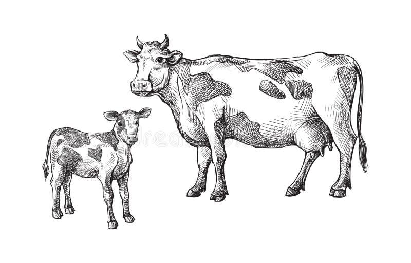 用手被画的母牛和小牛剪影  家畜 牛 动物吃草 皇族释放例证