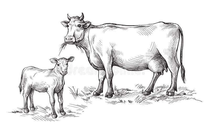 用手被画的母牛和小牛剪影  家畜 牛 动物吃草 库存例证