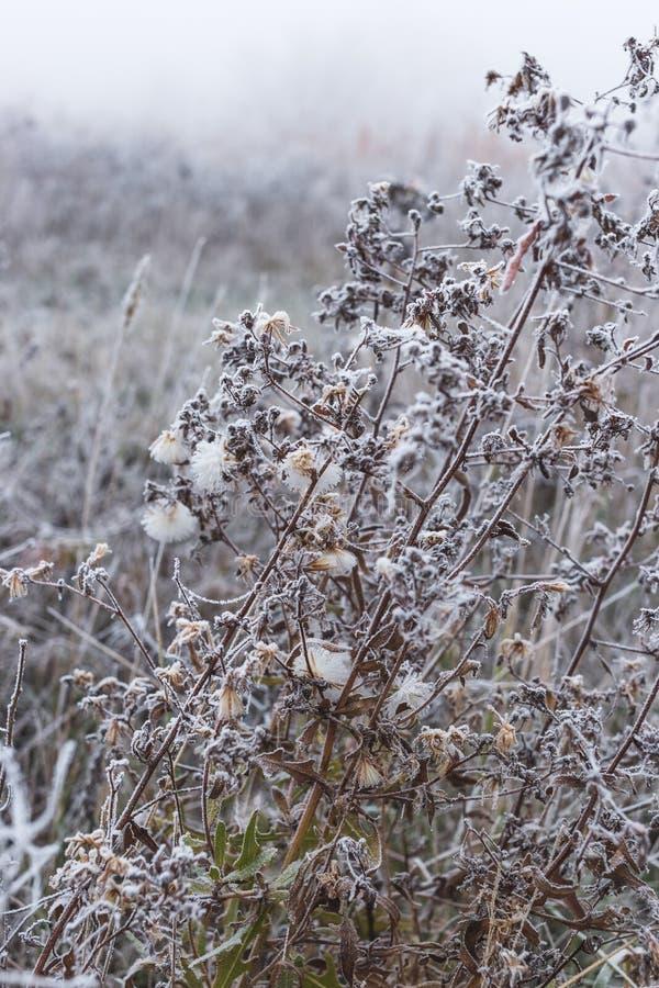 用树冰和花的盖的领域草 库存照片