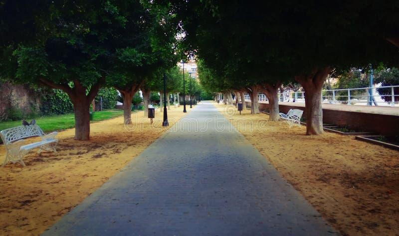 用树报道的方式在西班牙 免版税库存照片