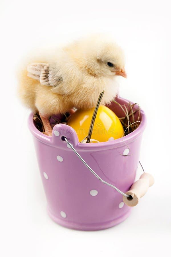 用桶提小鸡年轻人 图库摄影
