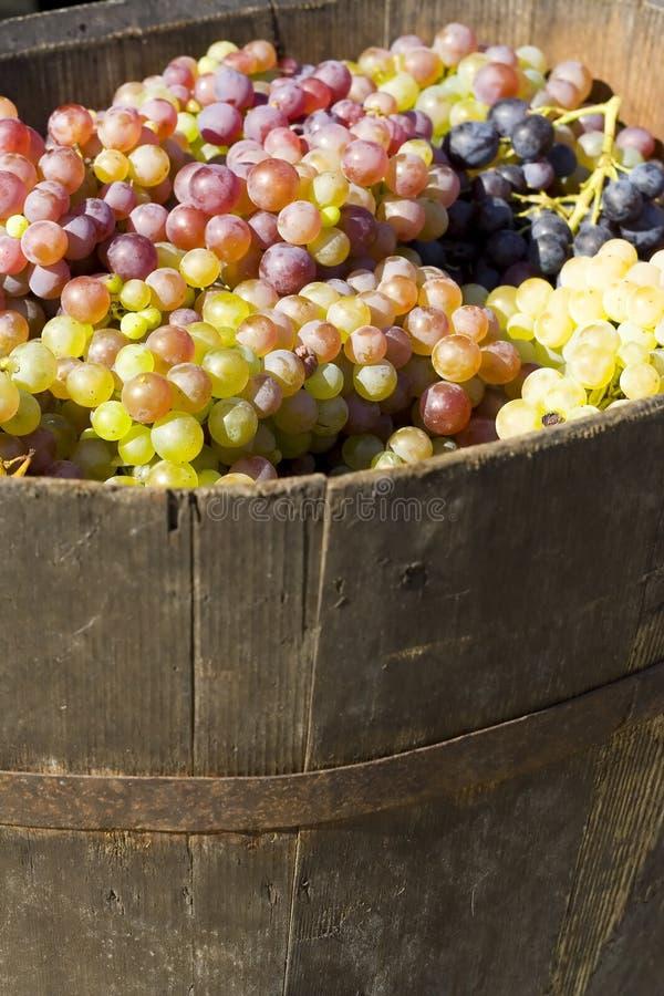 用桶提成熟的葡萄 免版税库存照片