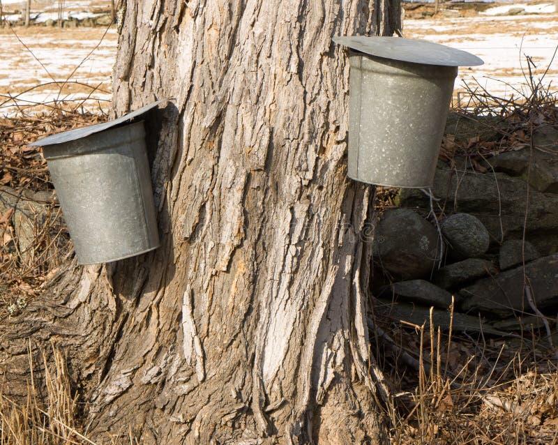 用桶提槭树树汁糖浆 库存图片