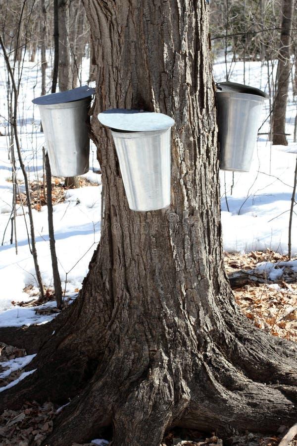 用桶提槭树树汁 免版税库存图片