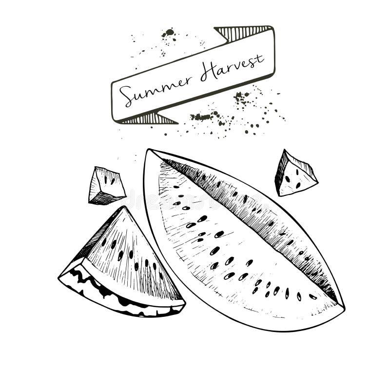 用横幅和污点夏天收获装饰的传染媒介套 Watwrmelon切片 向量例证