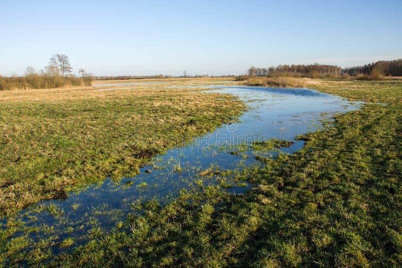 用水充斥的草甸 免版税图库摄影