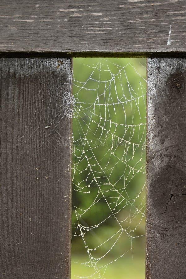用水掩盖的蜘蛛网下降,捷克,欧洲 库存照片