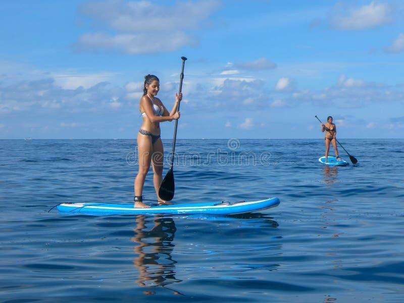 用浆划在热带海滩的一口板的可爱的年轻女人 与明轮轮叶的活跃暑假 美丽热带 库存照片