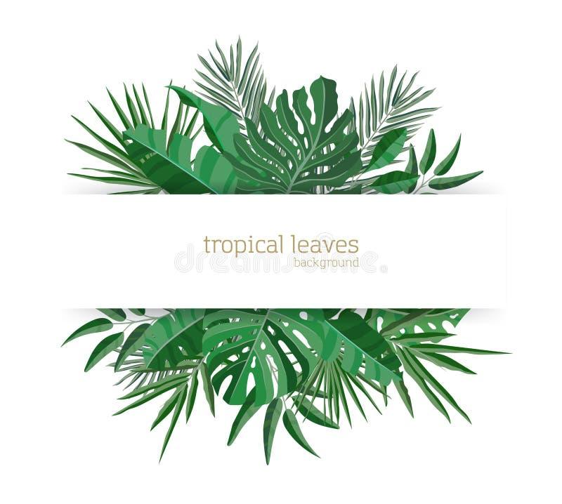 用热带天堂植物绿色叶子或绿色异乎寻常的棕榈叶装饰的水平的横幅模板 典雅 皇族释放例证