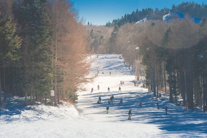 用白色雪的山报道的滑雪在白色雪的美好的风景观点和人在滑雪胜地 免版税库存图片