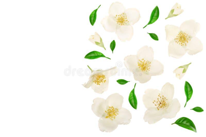 用绿色叶子装饰的茉莉花花隔绝在与拷贝空间的白色背景特写镜头您的文本的 库存例证