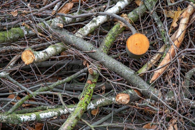 用绿色青苔报道的被锯的木头和裁减树枝混乱  树干的横断面 木材背景 木柴树 库存照片