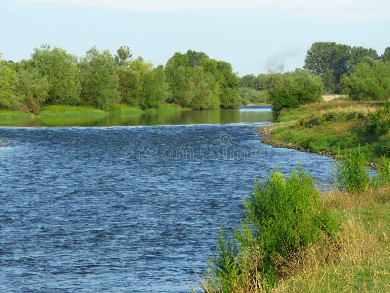 用绿草和树和河岸盖的河床在夏天 在绿河的银行的夏天风景在日出的 免版税库存图片