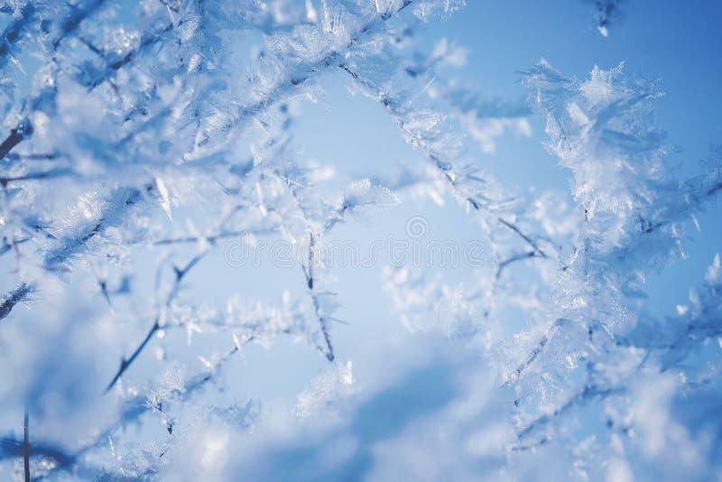 用美丽的冰晶报道的分支反对天空蔚蓝在一个明亮的冬日 免版税库存照片