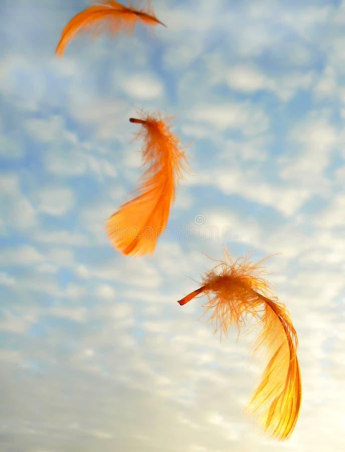用羽毛装饰桔子 库存照片