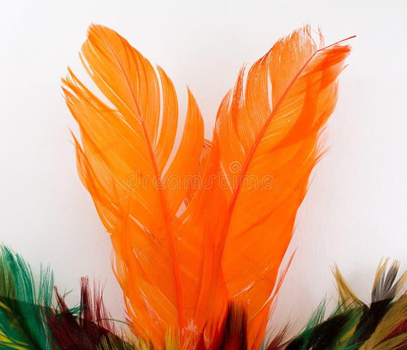 用羽毛装饰桔子 免版税图库摄影