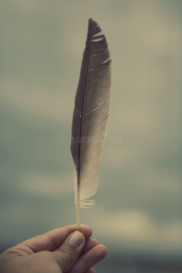 用羽毛装饰现有量藏品 图库摄影