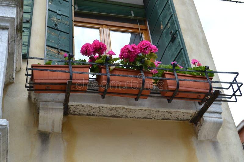 用花大竺葵塑料花瓶装饰的威尼斯房子摆在古老阳台在一个晴朗的春日 免版税图库摄影