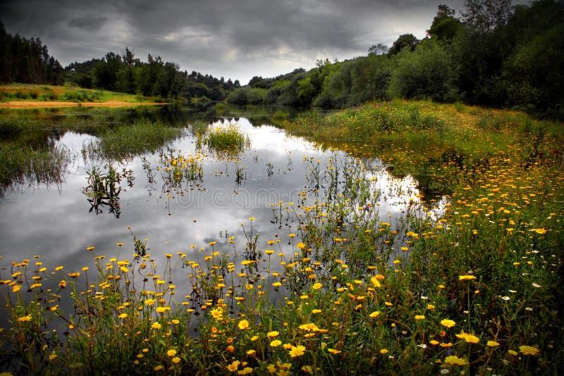 用花装饰的湖 免版税库存照片