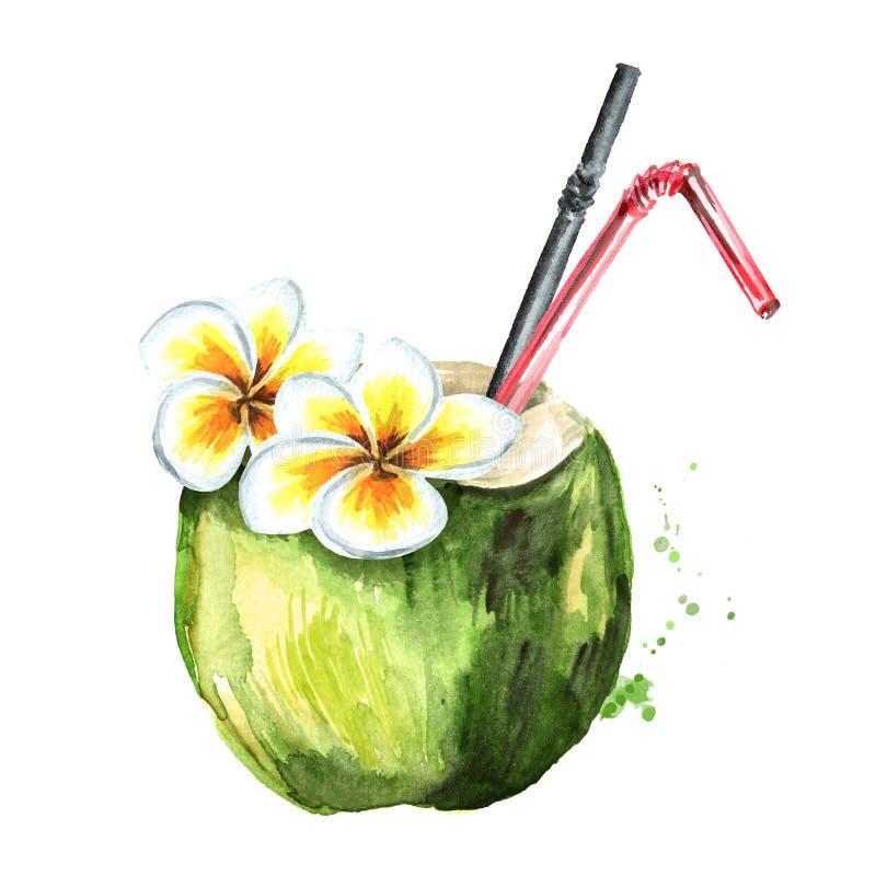 用花装饰的热带新鲜的椰子鸡尾酒 在白色背景隔绝的水彩手拉的例证 皇族释放例证