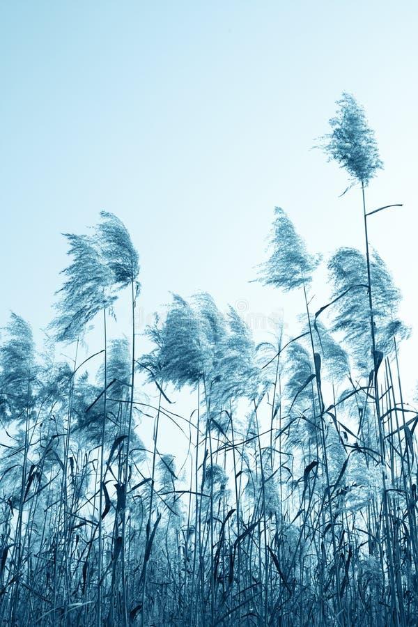 用茅草盖天空下 免版税库存照片