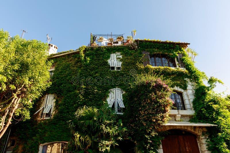 用藤盖的豪华石大厦门面在老欧洲镇,安地比斯,法国 免版税库存照片