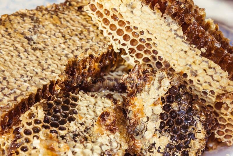 用蜡盖的蜂蜂窝 库存图片