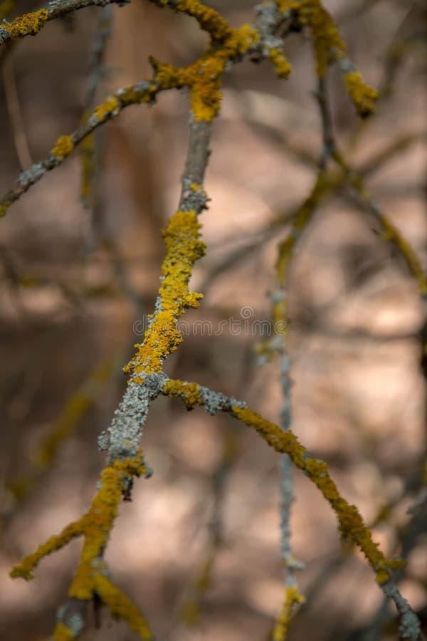 用蜡笔盖的,树的吠声 免版税库存照片