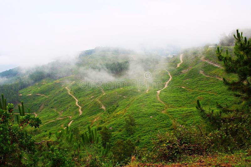 用豪华的绿叶和低云盖的山的倾斜接触地面 免版税图库摄影