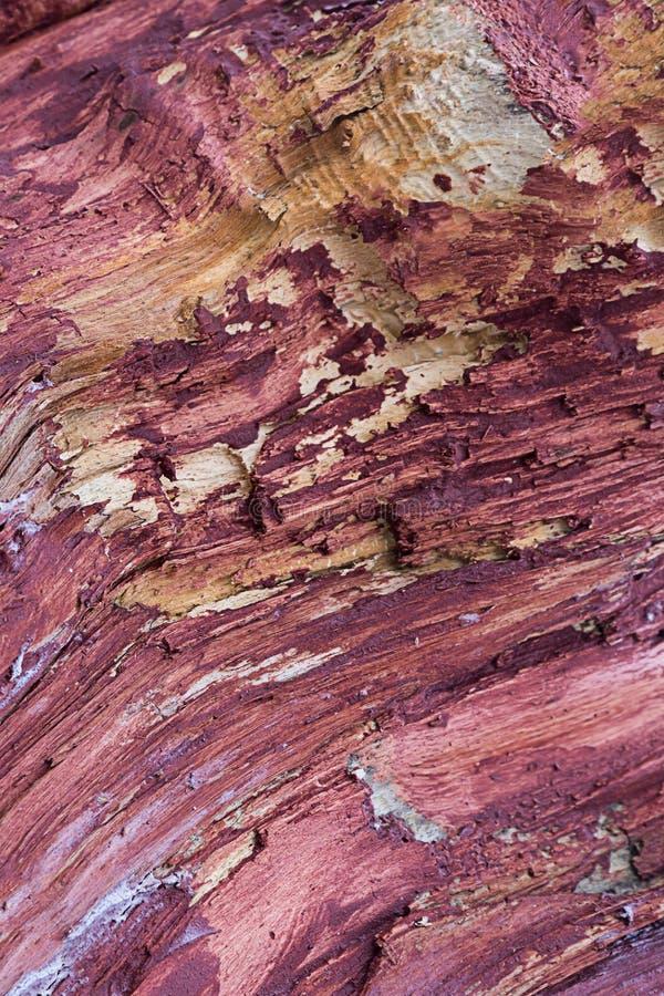 用赤土陶器油漆背景土气基地设计自然木样式盖的垂直的基本的树干 免版税库存图片