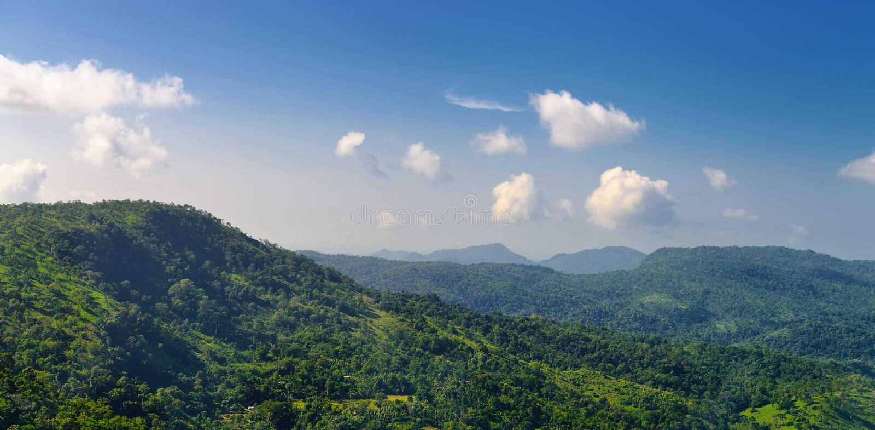 用通配森林包括的山 免版税图库摄影