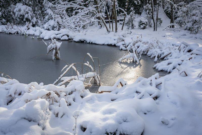 用银色冰盖的冬天池塘 太阳奇迹般地滑动在冰 选择聚焦 库存图片