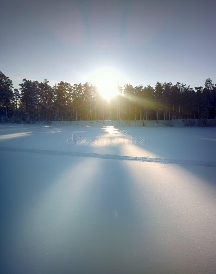用雪和冻湖盖的云杉的树森林 库存照片