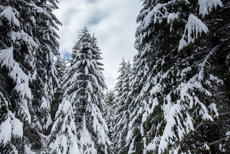 用雪报道的壮观和沈默美好的冬天风景 库存照片