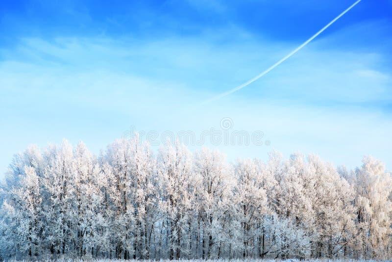 用雪报道的树上面反对一天空蔚蓝在一好日子 库存图片
