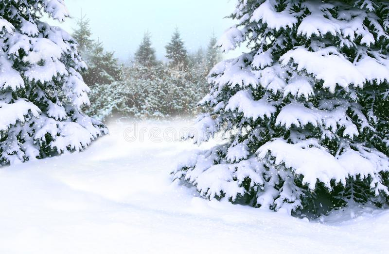 用雪盖的云杉 美好的冬天森林童话美丽的树 免版税库存图片