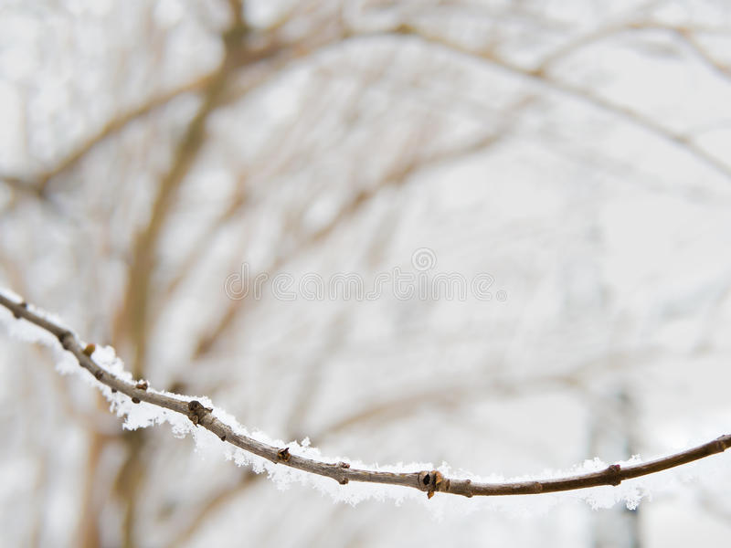 用雪盖的枝杈,冬天, copyspace 库存图片