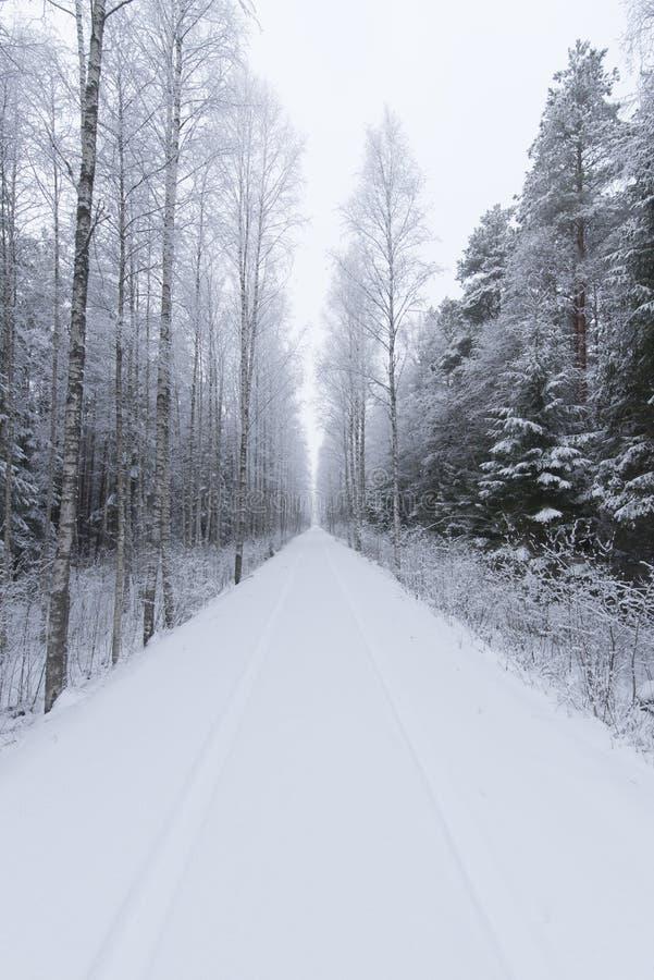 用雪盖的森林公路 免版税库存图片